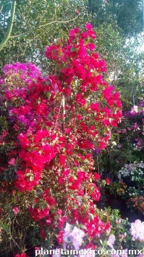 Fotos de jardiner a la encantada en xochimilco for Jardineria xochimilco