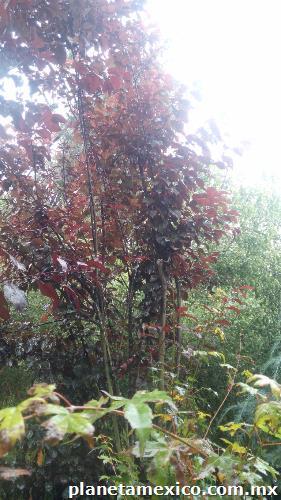 Jardiner a la encantada en xochimilco p gina web Jardineria xochimilco