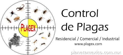 Plagex control de plagas y fumigaciones en monterrey for Control de plagas sevilla