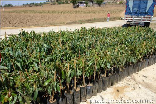 fotos de viveros frutales en xalapa