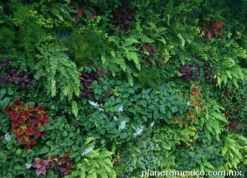 Muros verdes y jardiner a verdegreen en cancun tel fono y for Diseno de muros verdes