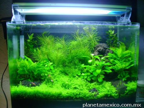 Fotos de peceras peces plantas acu ticas en guadalajara for Acuarios ornamentales