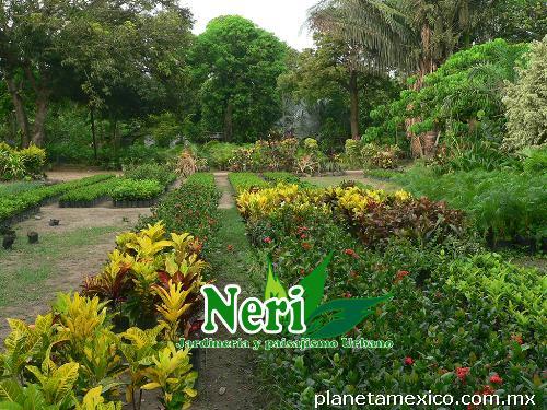 Fotos de viveros neri jardiner a y paisajismo urbano en for Jardineria y paisajismo fotos