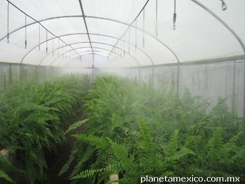 Fotos de Riego Por Nebulización Para Invernadero en Cuernavaca