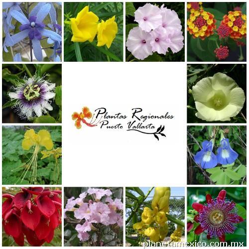 venta de plantas nativas ornamentales en puerto vallarta
