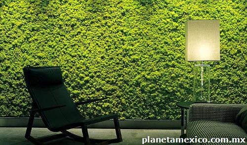 Fotos de follaje y muros verdes artificiales y naturales for Muros verdes naturales